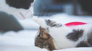 Kattunge leker med mamma