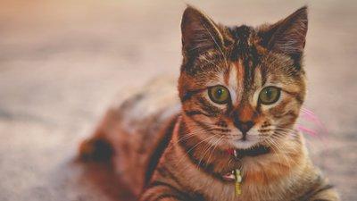 Katt hos kattstallet