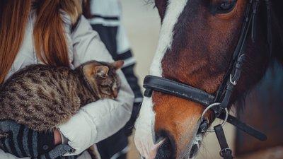 Person som står ved siden av en hest