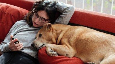 Nainen selaa puhelinta sohvalla koira vieressään