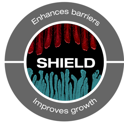 Shield graphic