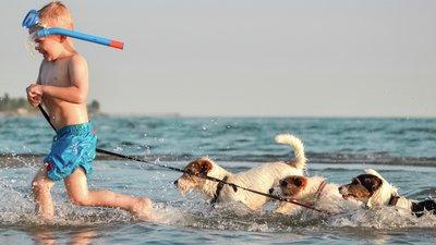 Resa med hund, så gäller försäkringen