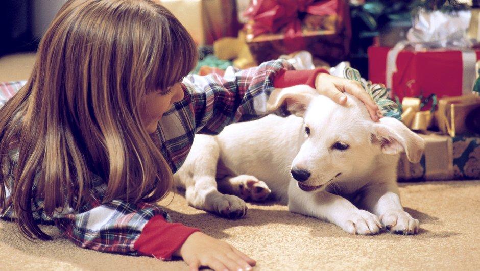 Uguņošanas laikā nodrošini guļvietu klusā un mierīgā vietā iekštelpās, kas radītu sunim sajūtu, ka viņš ir paslēpies.