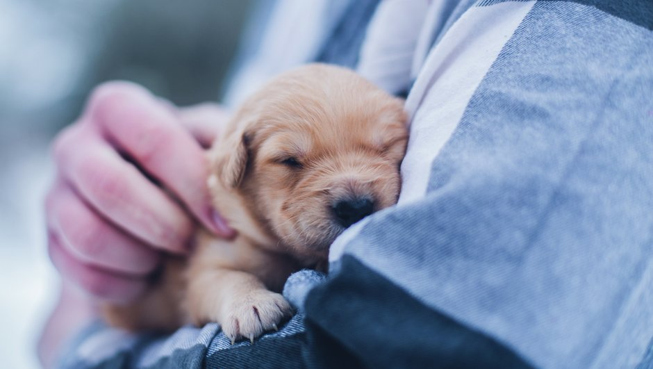 nuori koiranpentu eläinlääkärin sylissä