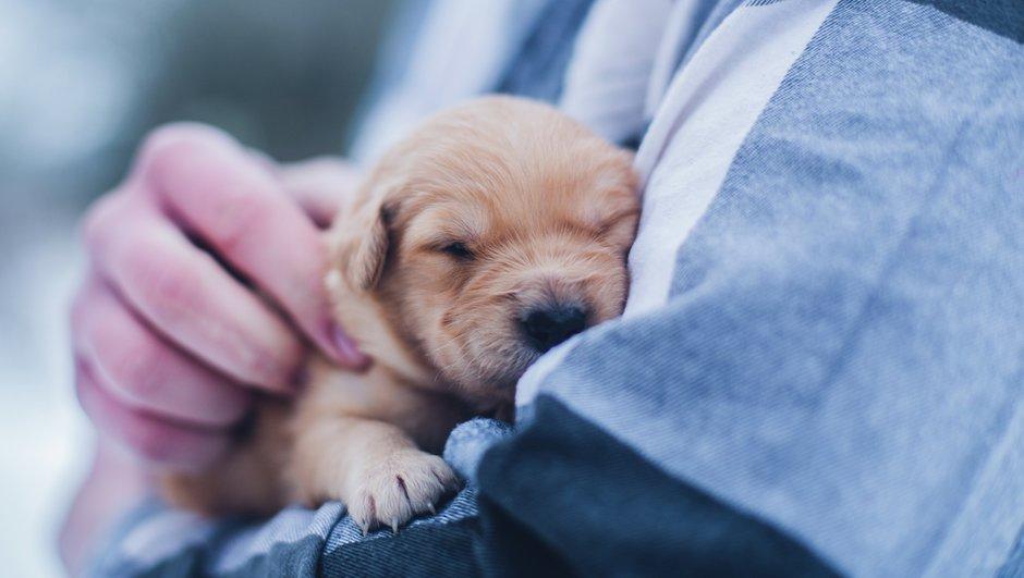 Tryghed for dig og din hund