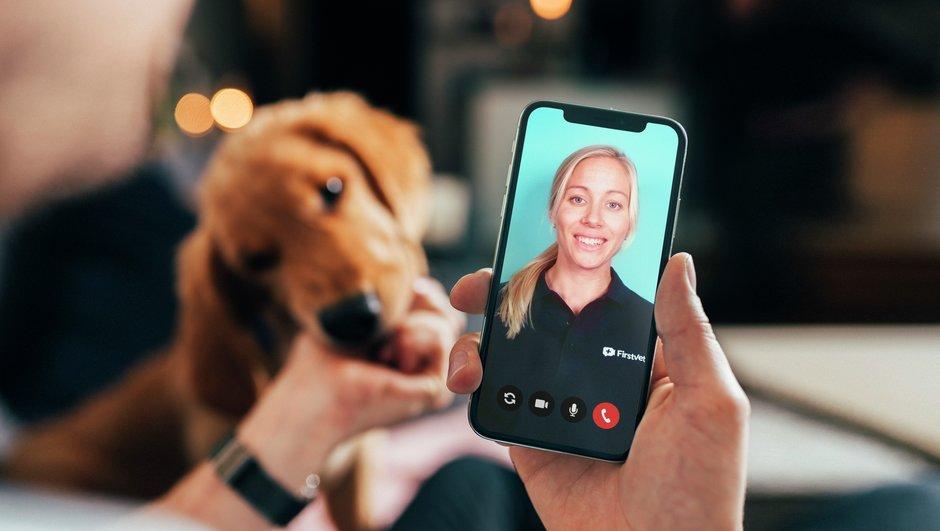 Hundförsäkring där FirstVet ingår