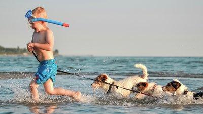 Lapsi juoksee vedessä koirien kanssa