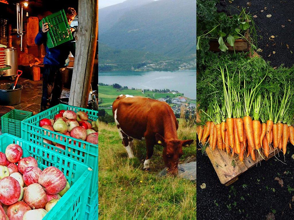 Fotocollage med tre bilete som illustrerer landbruk, eitt med nyplukka eple, eitt med ei ku, eitt med nyplukka gulrøter.