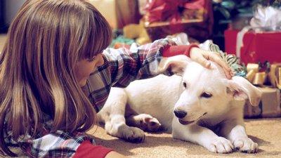 Suņiem uguņošana saistās ar draudiem, palīdzi sunim un nomierini.