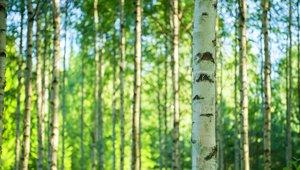 Træer i en skov.