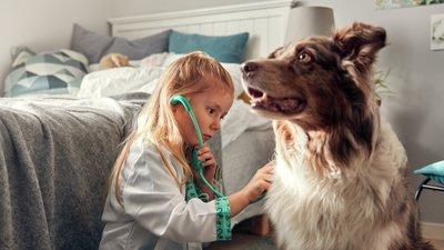 Hund och flicka leker