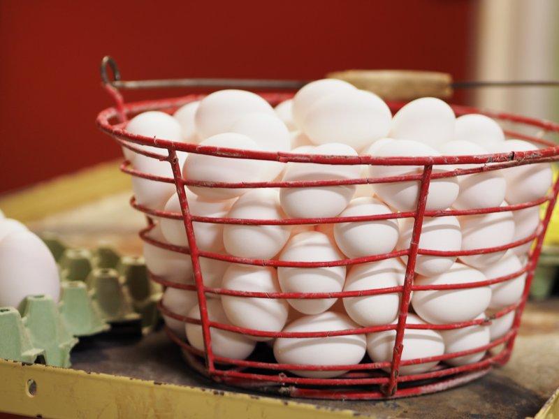 Elin Røssvoll, veterinær i Nyt Norge med doktorgrad i mattrygghet, med norsk egg. De er garantert uten salmonella!