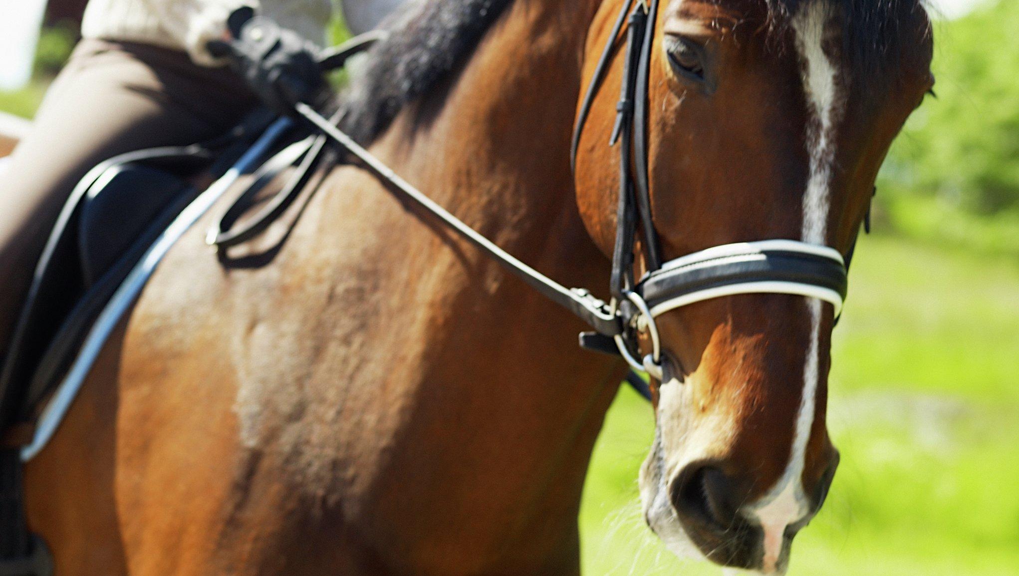 Hevosvakuutus