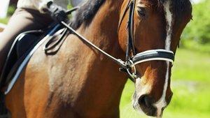 En häst med ryttare