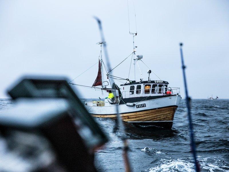 Tørrfisk fra Lofoten. Fotograf: Stian Broch.
