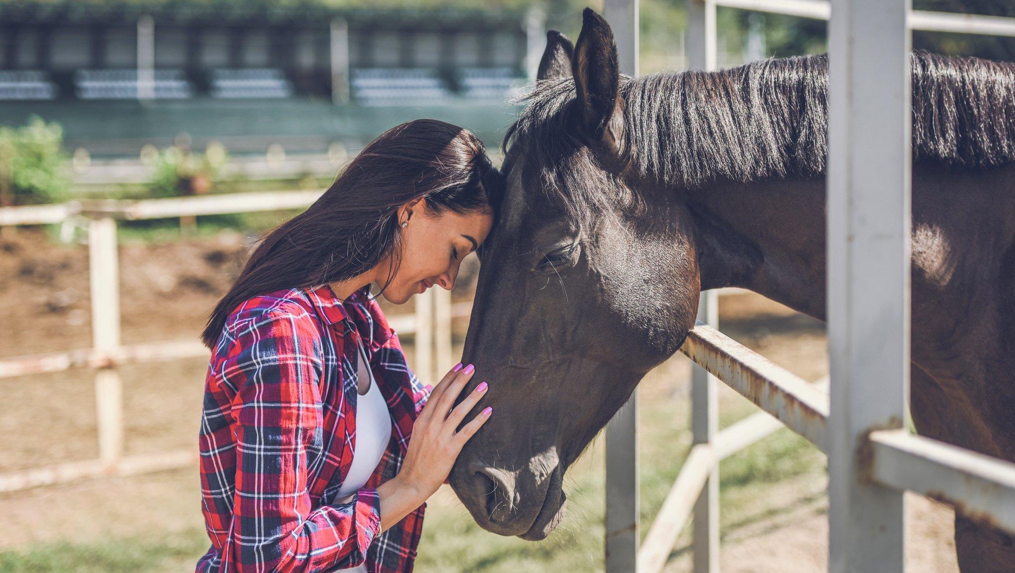 Hästförsäkring