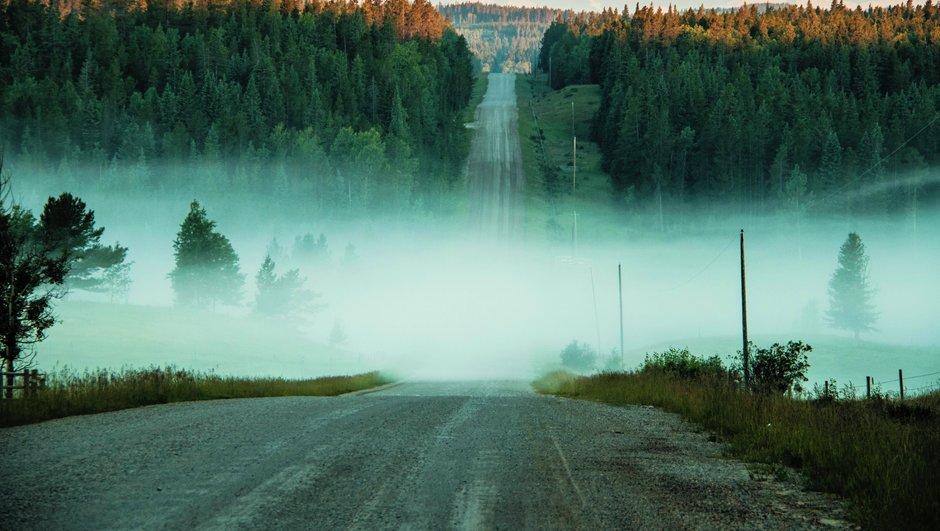 Udu, uduvihm, hommikuvalgus ja õhtuhämarus on ohtlikumad ajad, mil metsloomadega kokkupõrkeid juhtub