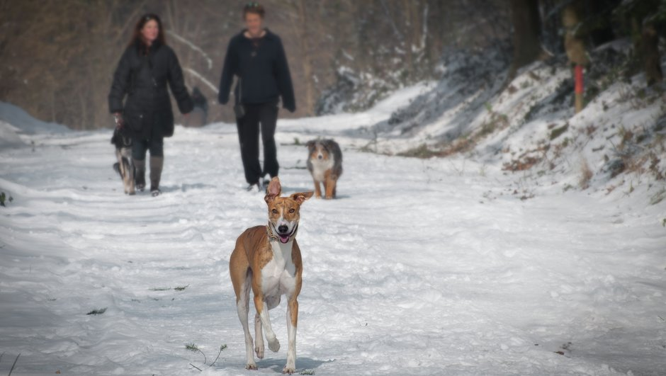 Vinterpromenad med hundarna