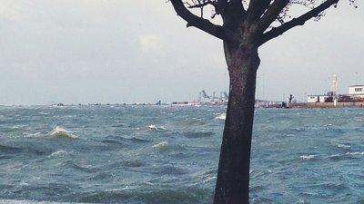 Träd vid översvämning