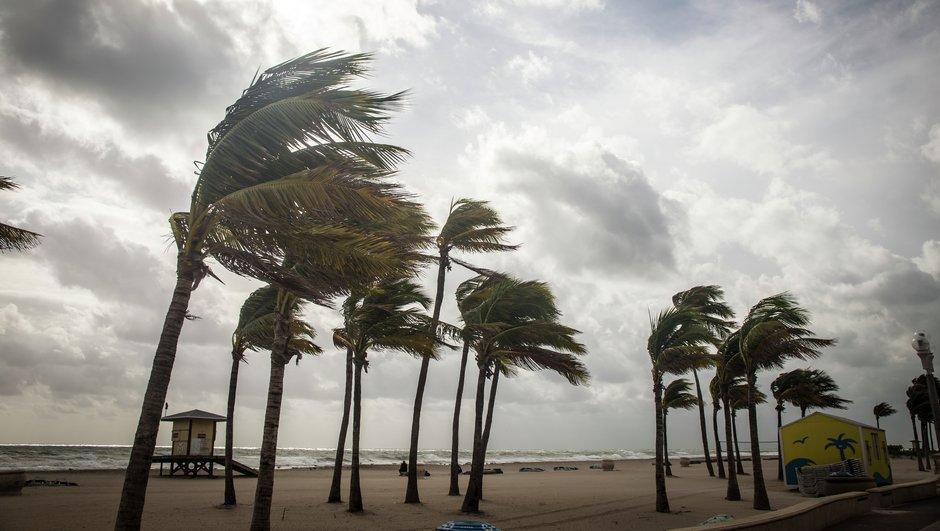 Palmuja kovassa tuulessa Floridan rannikolla