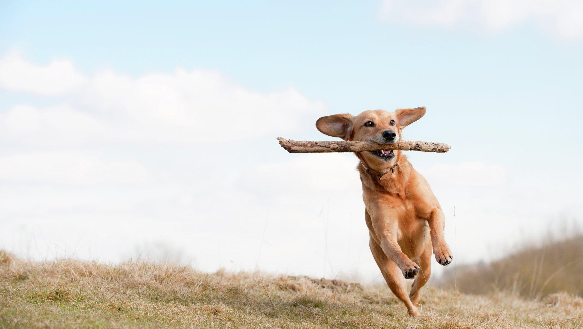 Hundelopper