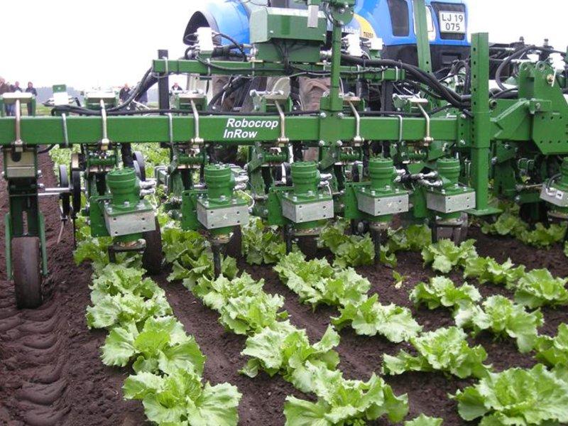 Slik dyrkes salat: Her er Pernille Rød Larsen som viser oss grønnsaksdyrking på Huseby gård. De dyrker brokkoli, blomkål, kål og salat. Dette blir norsk salat.