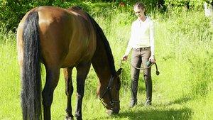 Häst på grönbete