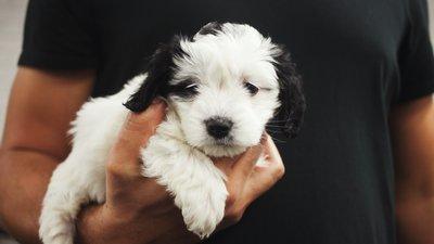neaizmirsti parūpējies par suņa  labsajūtu arī aukstajā laikā