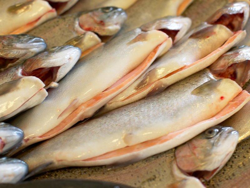 Norsk ørret til produksjon av rakfisk fra Valdres